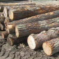 Elm Wood Logs