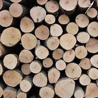 Red Oak Wood Logs