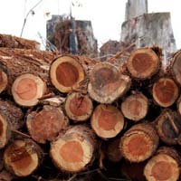 Red Wood Logs