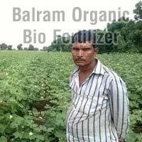 Organic Cotton Crop Fertilizer