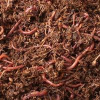 Earthworm Seeds
