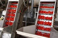Tomato Processing Plants