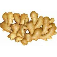 Fresh Indian Ginger
