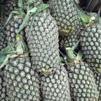 Fresh Indian Pineapple