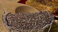 Mushroom Seeds
