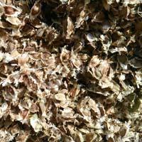 Drumsticks Seeds