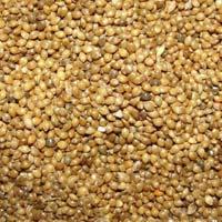 Samai Millet Seeds