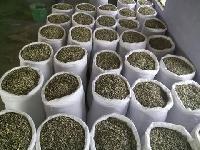 Moringa seed PKM 1 and PKM 2