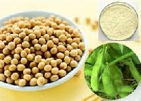 Soya Bean Extract