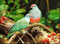 Live Birds