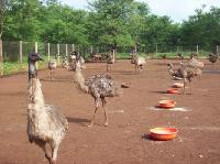Emu Bird Farm House