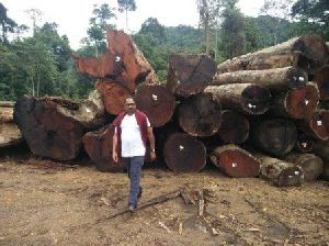 Timber In Andhra Pradesh Manufacturers And Suppliers India