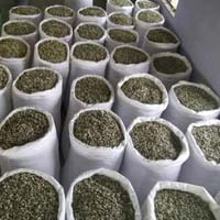 Pkm 1 Moringa Seeds