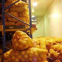 Onion Cold Storage