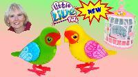 Live Pet Birds