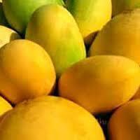 Totapuri Mango