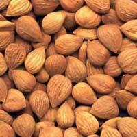 Dry Apricot Kernels