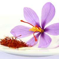 Fresh Saffron Flowers