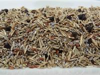 Forage Seeds