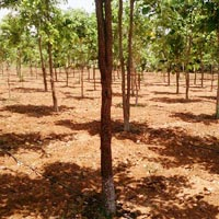 Land Lease Services
