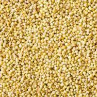 Millets Seeds