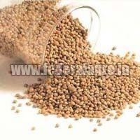 A Grade Sorghum Seeds