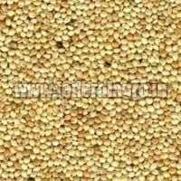 C Grade Sorghum Seeds
