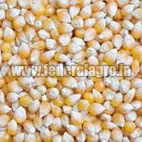 Animal Feed Maize Seeds