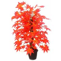 Maple Plant N.stick  2( Red,)