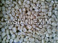 White Maize Seeds
