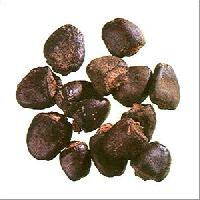 Bhilawa Seed