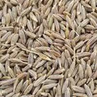 White Cumin Seed