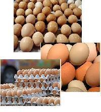 High Quality Organic Fresh Chicken Table Eggs