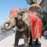 Elephant Rental Services For Wedding