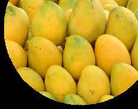 baiganpally Mango