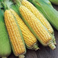 Ready To Eat Sweet Corn