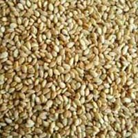 Sesame Seeds (single Skin)