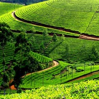 Kerala Tour With Western Ghats