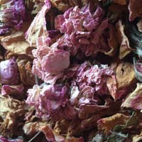 Dried Red Rose Petal