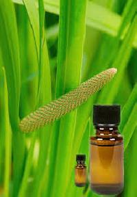 Calamus Oil