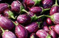 Brinjal - (eggplant )