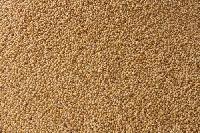 Foxtail Millet- (Thinai Rice)