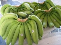 Fresh Cavandish Banana