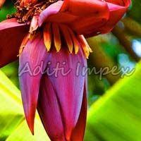 Organic Banana Flower