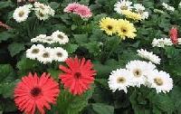 Flower afrming