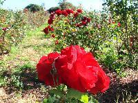 Flower Farming Services