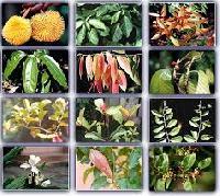 Medicine Plants Farming