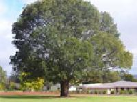 Tree Farming Services