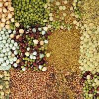 Hybrid Vegetables Seeds