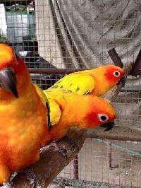 Ice Parrot Egg Group - Jardine Parrots Manufacturer